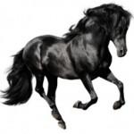 Dark-Horse-300x190